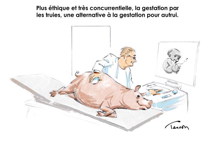 Gestation par les truies/GPA